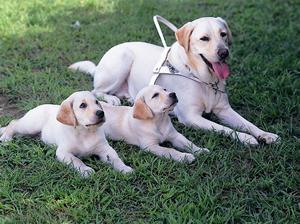盲導犬の育成を応援しよう!