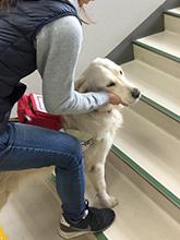 盲導犬ベリー