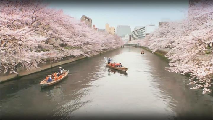春のうららの(東京都 墨田川)
